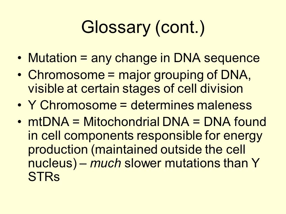 Glossary (cont.) Mutation = any change in DNA sequence Chromosome = major grouping of DNA, visible at certain stages of cell division Y Chromosome = determines maleness mtDNA = Mitochondrial DNA = DNA found in cell components responsible for energy production (maintained outside the cell nucleus) – much slower mutations than Y STRs