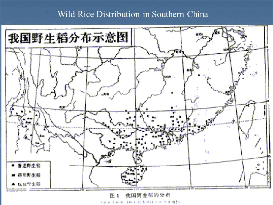Wild Rice Distribution in Southern China