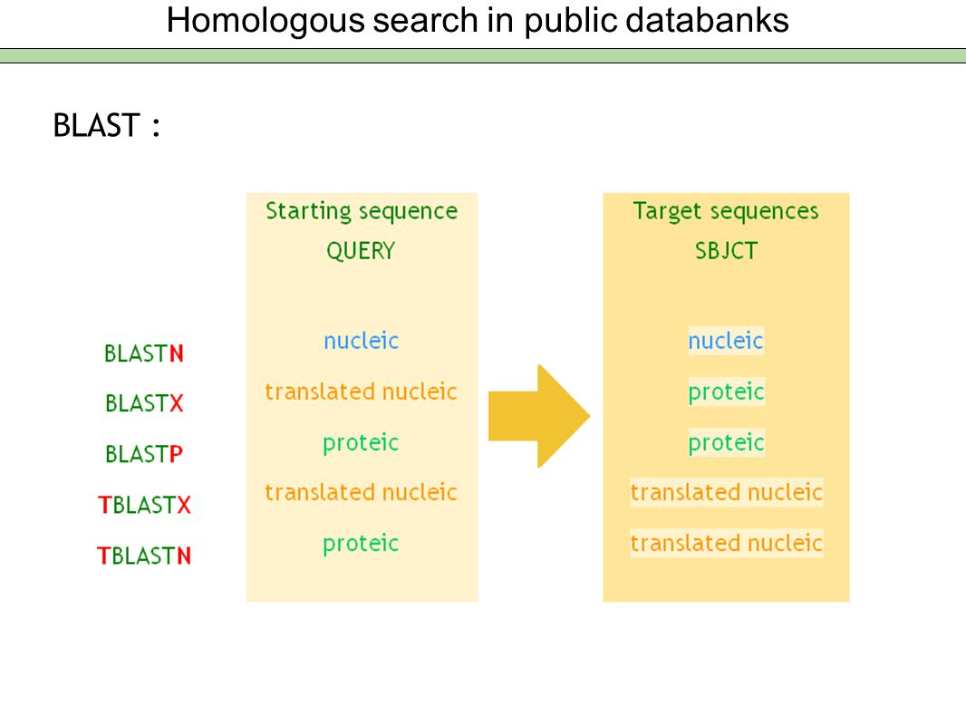 Homologous search in public databanks BLAST :