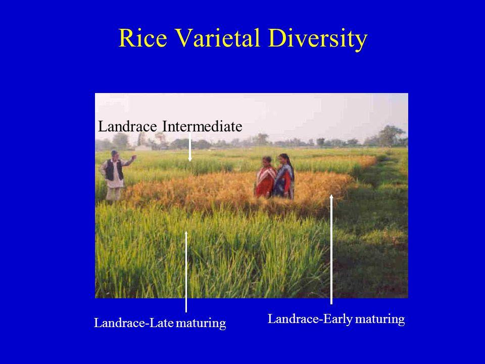 Rice Varietal Diversity Landrace-Late maturing Landrace-Early maturing Landrace Intermediate