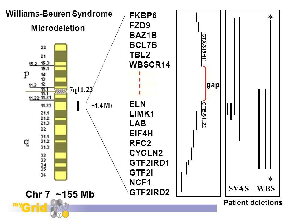 Williams-Beuren Syndrome Microdeletion Chr 7 ~155 Mb FKBP6 FZD9 BAZ1B BCL7B TBL2 WBSCR14 STX1A CLDN4 CLDN3 ELN LIMK1 LAB EIF4H RFC2 CYCLN2 GTF2IRD1 GTF2I NCF1 GTF2IRD2 SVAS WBS 7q11.23 * * ~1.4 Mb gap Physical contig Patient deletions CTA-315H11 CTB-51J22