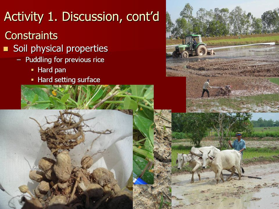 Crop Diversification in Cambodia Constraints Soil physical properties Soil physical properties –Puddling for previous rice  Hard pan  Hard setting s