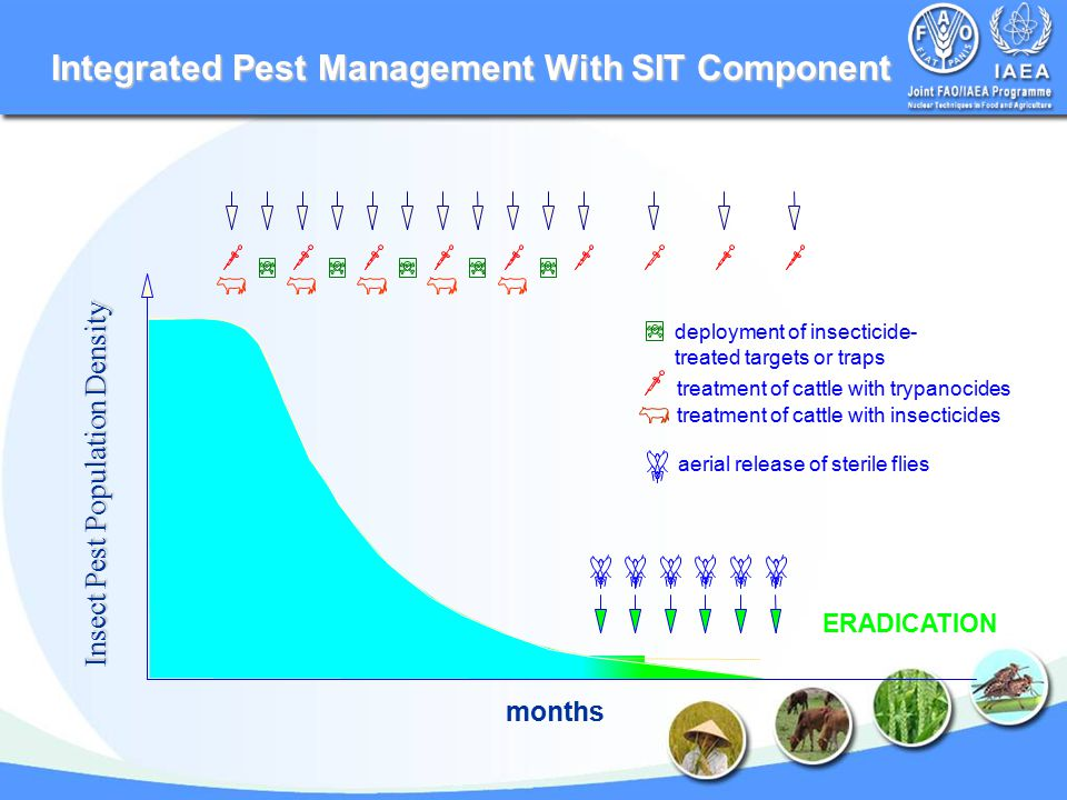 Integrated Pest Management With SIT Component