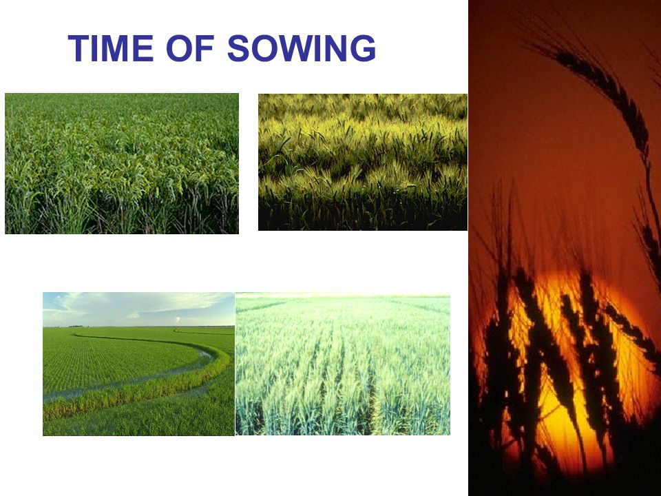 TIME OF SOWING