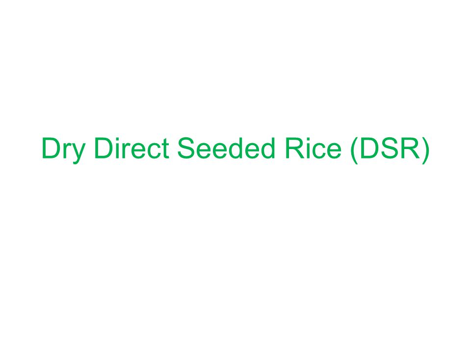 Dry Direct Seeded Rice (DSR)