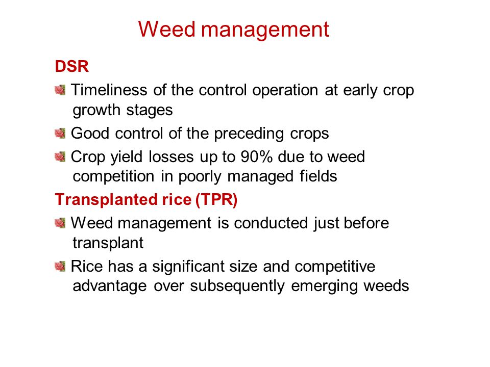 Weed management DSR Timeliness of the control operation at early crop growth stages Good control of the preceding crops Crop yield losses up to 90% due to weed competition in poorly managed fields Transplanted rice (TPR) Weed management is conducted just before transplant Rice has a significant size and competitive advantage over subsequently emerging weeds