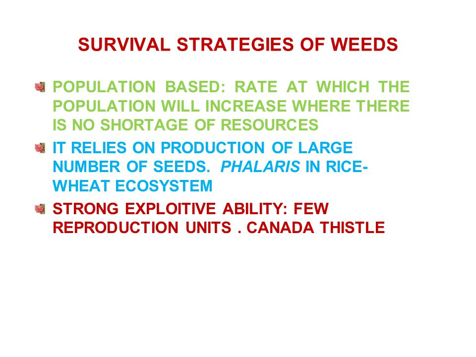 Echinochloa spp./ Phalaris ( resistance)/ regeneration Pre-emergence: 1.