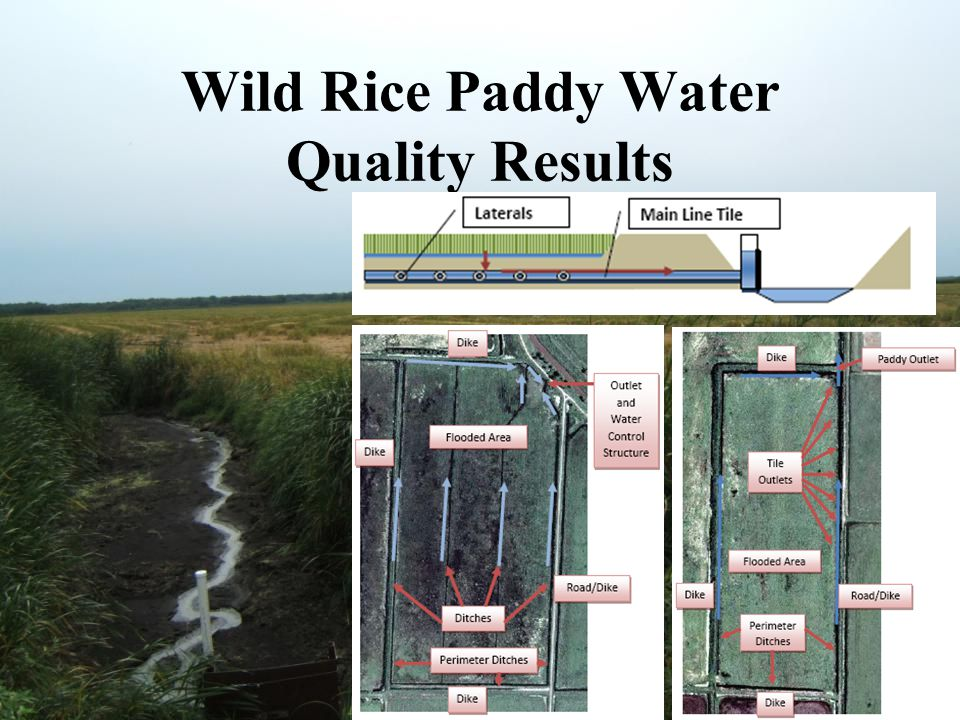 Wild Rice Paddy Water Quality Results