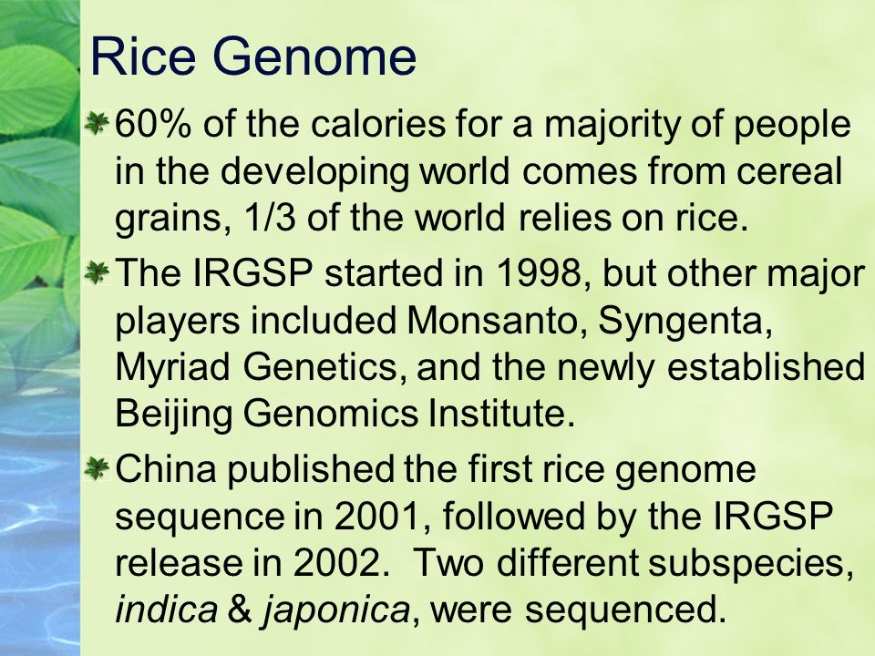 Rice Genome 60% of the calories for a majority of people in the developing world comes from cereal grains, 1/3 of the world relies on rice.