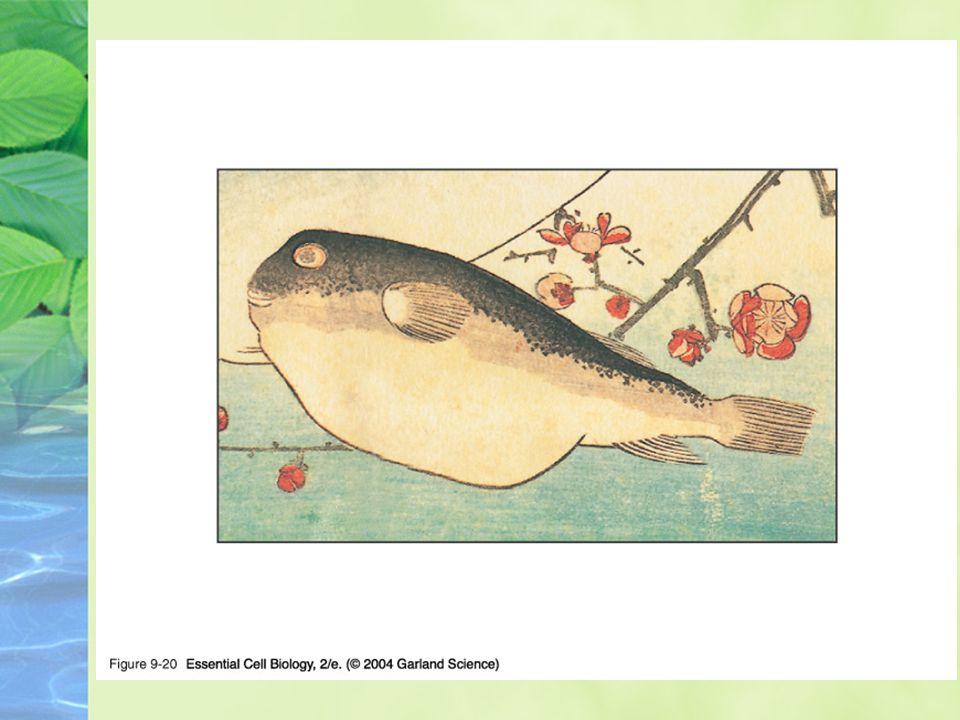 09_20_puffer.fish.jpg