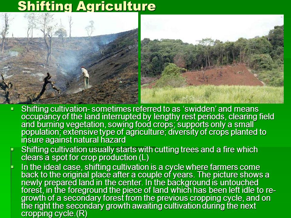 Shifting Agriculture  Shifting cultivation- sometimes referred to as 'swidden' and means occupancy of the land interrupted by lengthy rest periods, clearing field and burning vegetation, sowing food crops; supports only a small population; extensive type of agriculture; diversity of crops planted to insure against natural hazard  Shifting cultivation usually starts with cutting trees and a fire which clears a spot for crop production (L)  In the ideal case, shifting cultivation is a cycle where farmers come back to the original place after a couple of years.