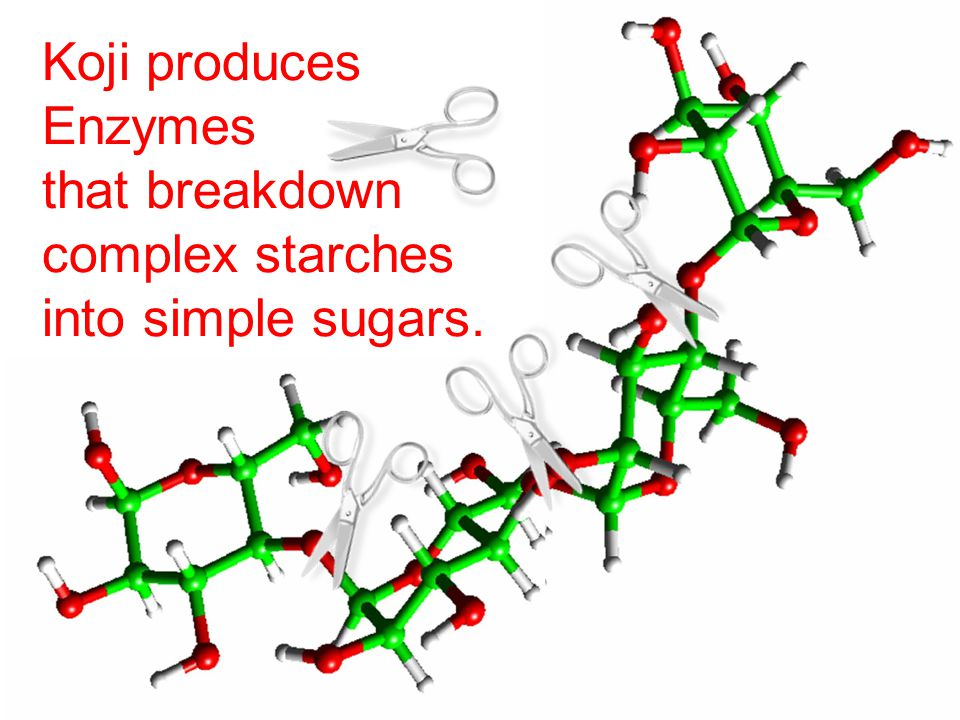 Koji produces Enzymes that breakdown complex starches into simple sugars.