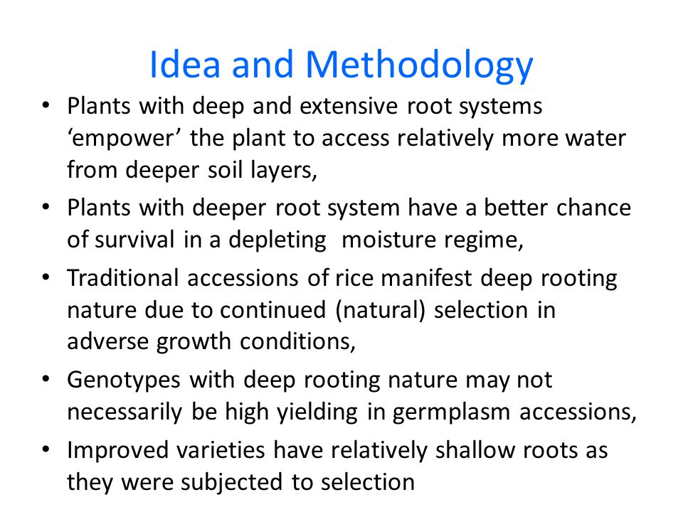 Idea and Methodology Plants with deep and extensive root systems 'empower' the plant to access relatively more water from deeper soil layers, Plants w