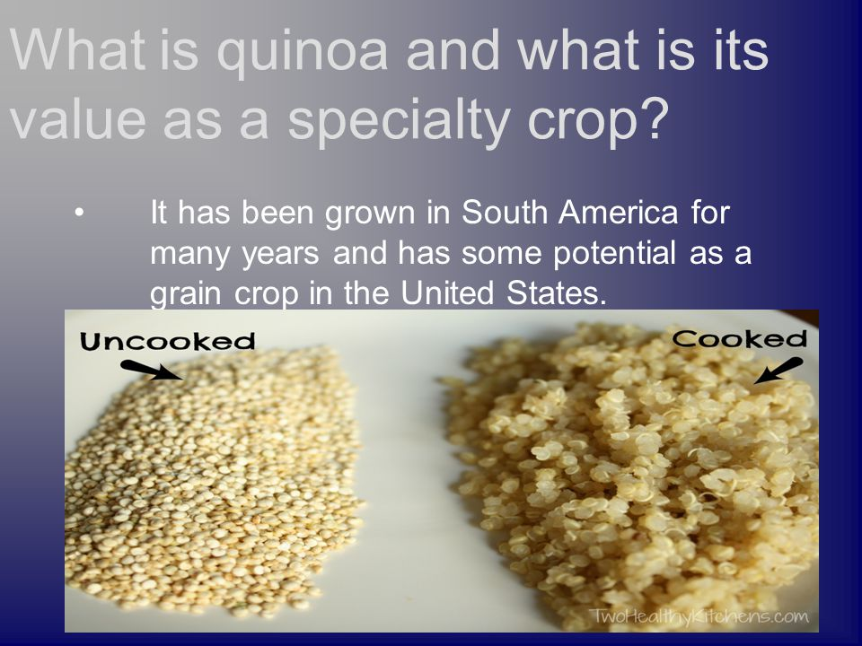 It has been grown in South America for many years and has some potential as a grain crop in the United States. What is quinoa and what is its value as