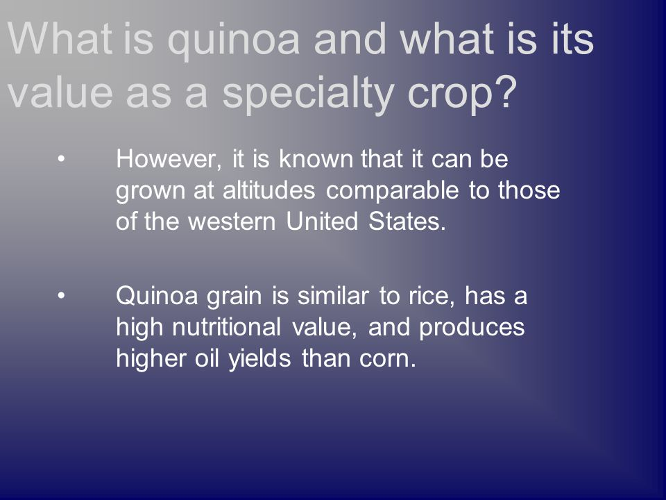 However, it is known that it can be grown at altitudes comparable to those of the western United States. Quinoa grain is similar to rice, has a high n