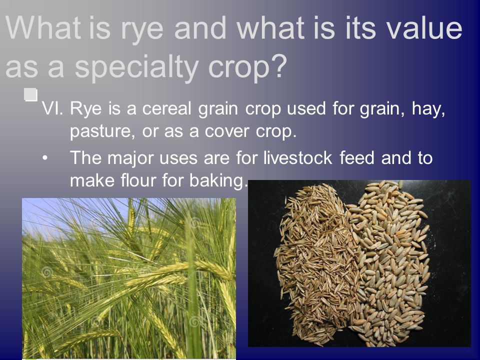 VI. Rye is a cereal grain crop used for grain, hay, pasture, or as a cover crop. The major uses are for livestock feed and to make flour for baking. W