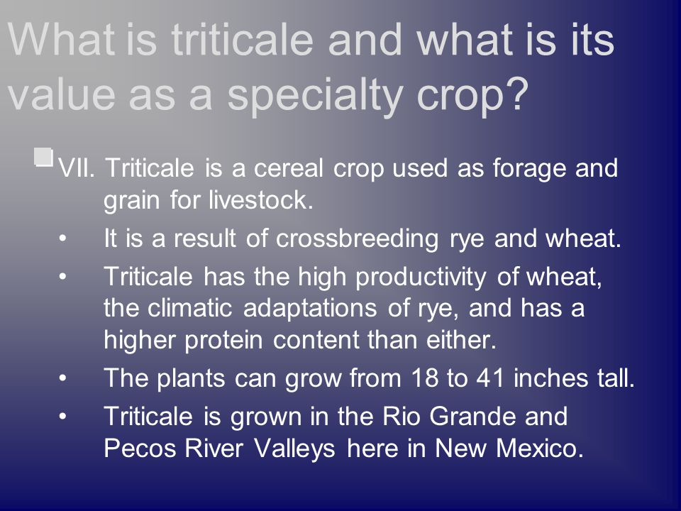 VII. Triticale is a cereal crop used as forage and grain for livestock. It is a result of crossbreeding rye and wheat. Triticale has the high producti