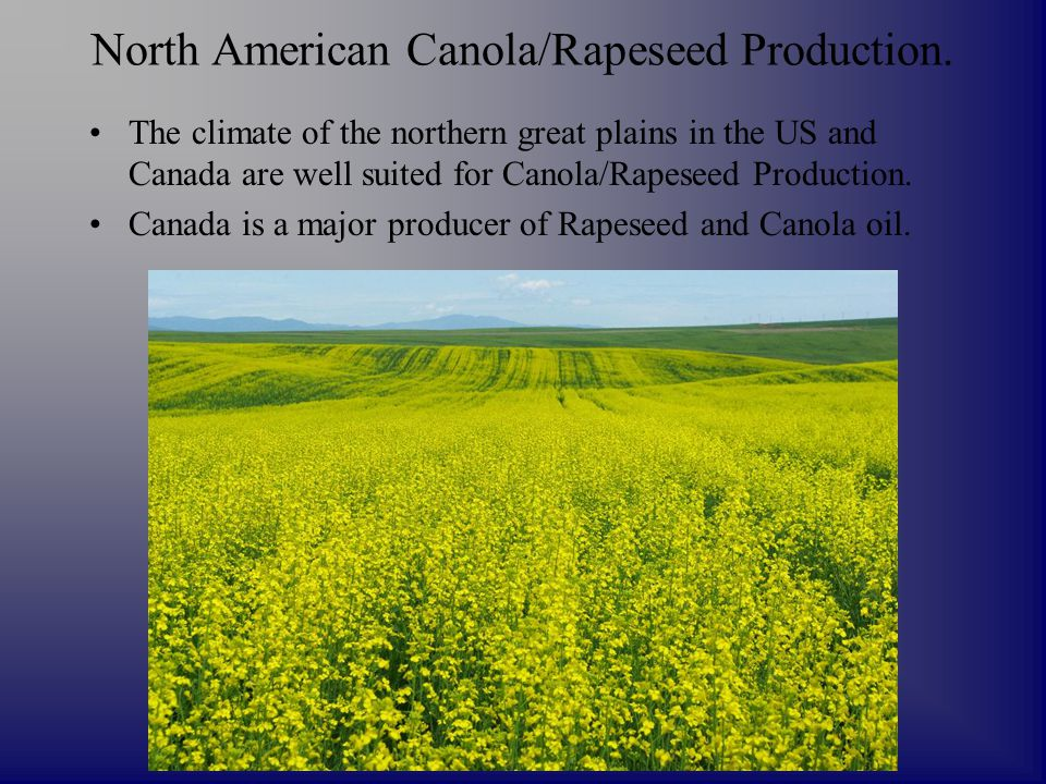 North American Canola/Rapeseed Production. The climate of the northern great plains in the US and Canada are well suited for Canola/Rapeseed Productio