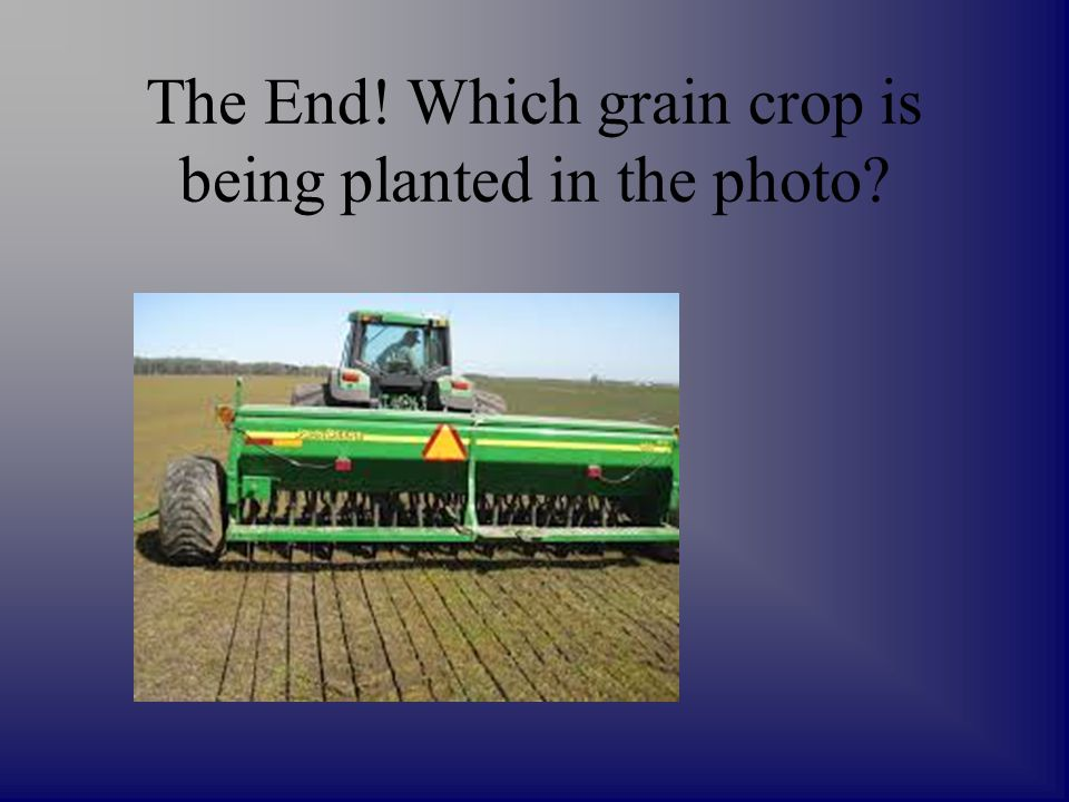 The End! Which grain crop is being planted in the photo?