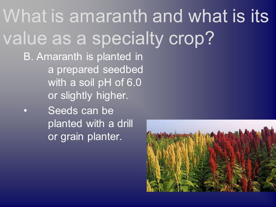 B. Amaranth is planted in a prepared seedbed with a soil pH of 6.0 or slightly higher.
