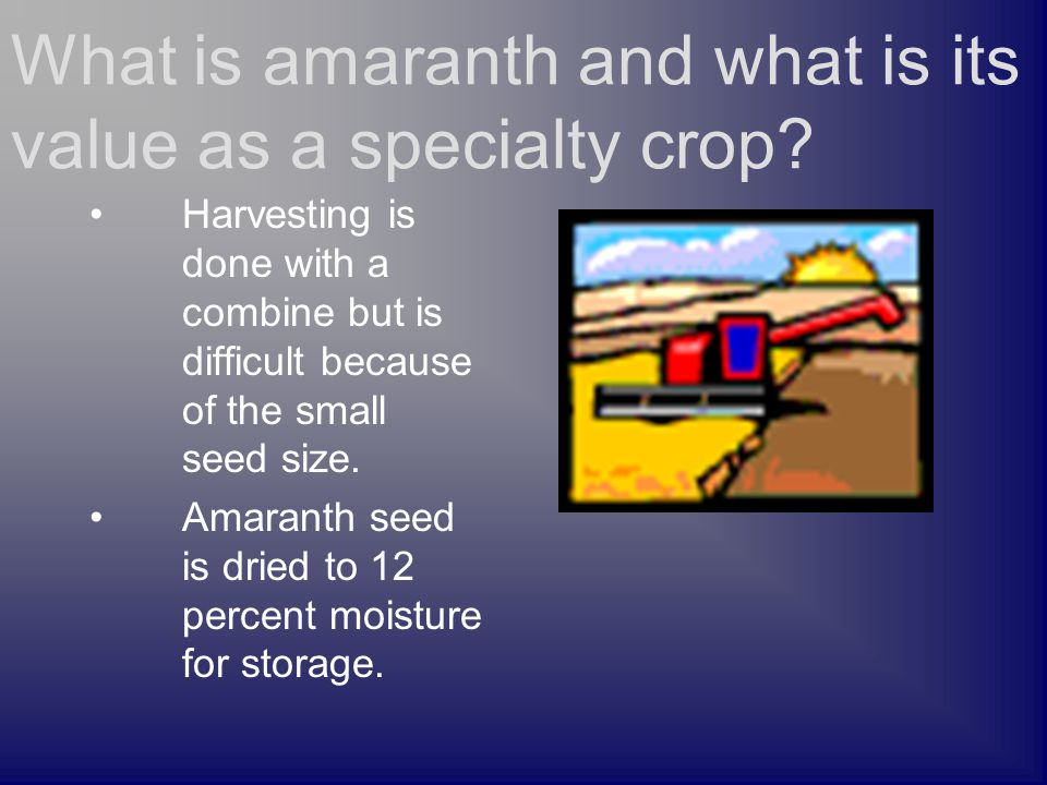 Harvesting is done with a combine but is difficult because of the small seed size. Amaranth seed is dried to 12 percent moisture for storage. What is