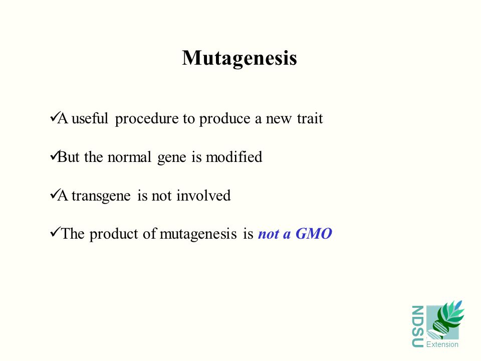 NDSU Extension Mutagenesis A useful procedure to produce a new trait But the normal gene is modified A transgene is not involved The product of mutagenesis is not a GMO