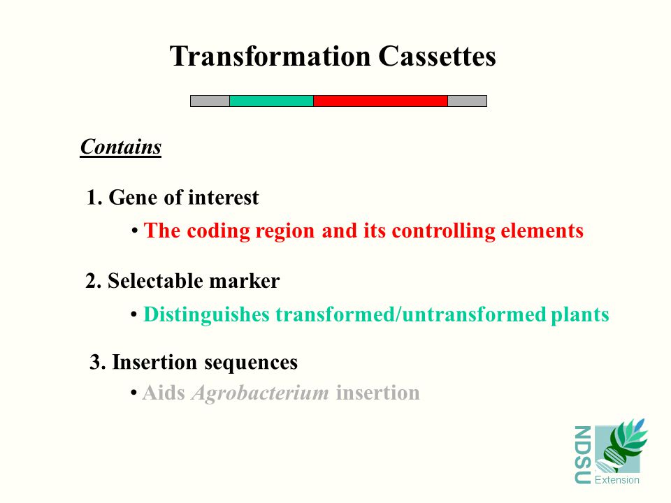 NDSU Extension Transformation Cassettes Contains 1.