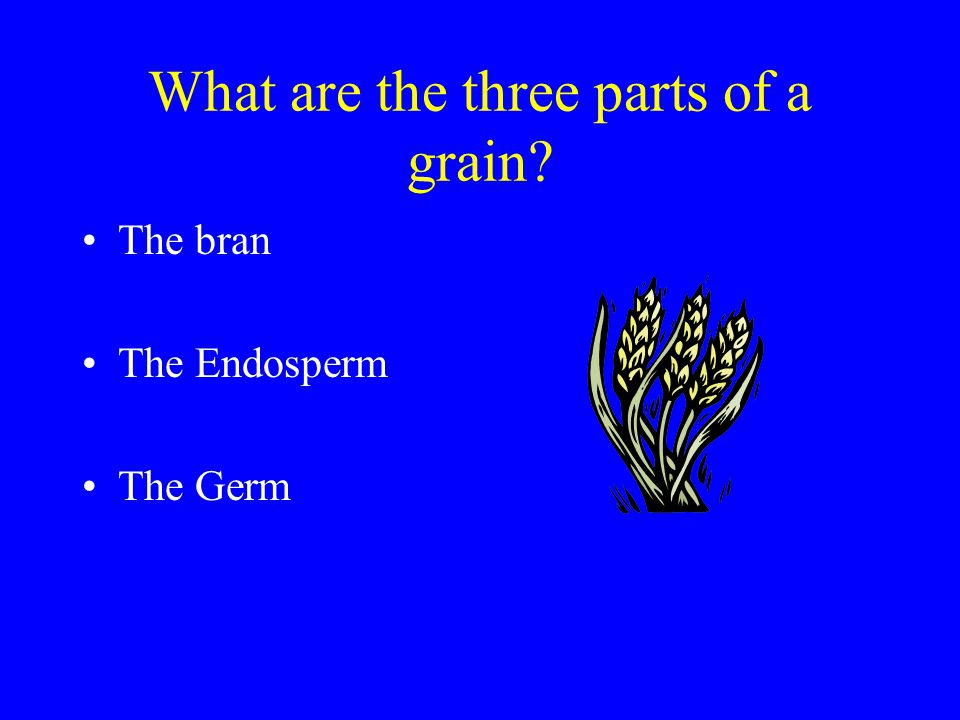 What are the three parts of the grain?