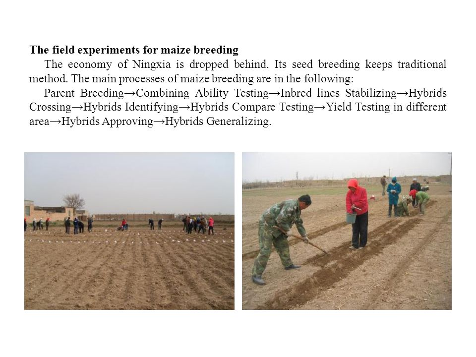 The field experiments for maize breeding The economy of Ningxia is dropped behind.
