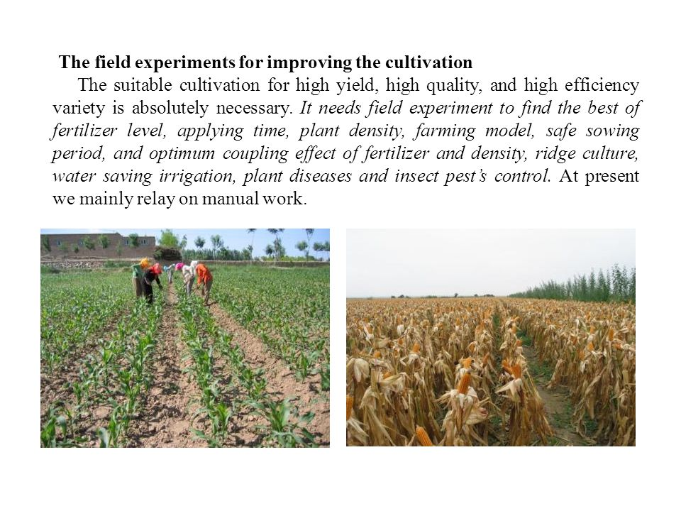 The field experiments for improving the cultivation The suitable cultivation for high yield, high quality, and high efficiency variety is absolutely necessary.