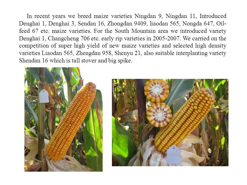 In recent years we breed maize varieties Ningdan 9, Ningdan 11, Introduced Denghai 1, Denghai 3, Sendan 16, Zhongdan 9409, liaodan 565, Nongda 647, Oil- feed 67 etc.