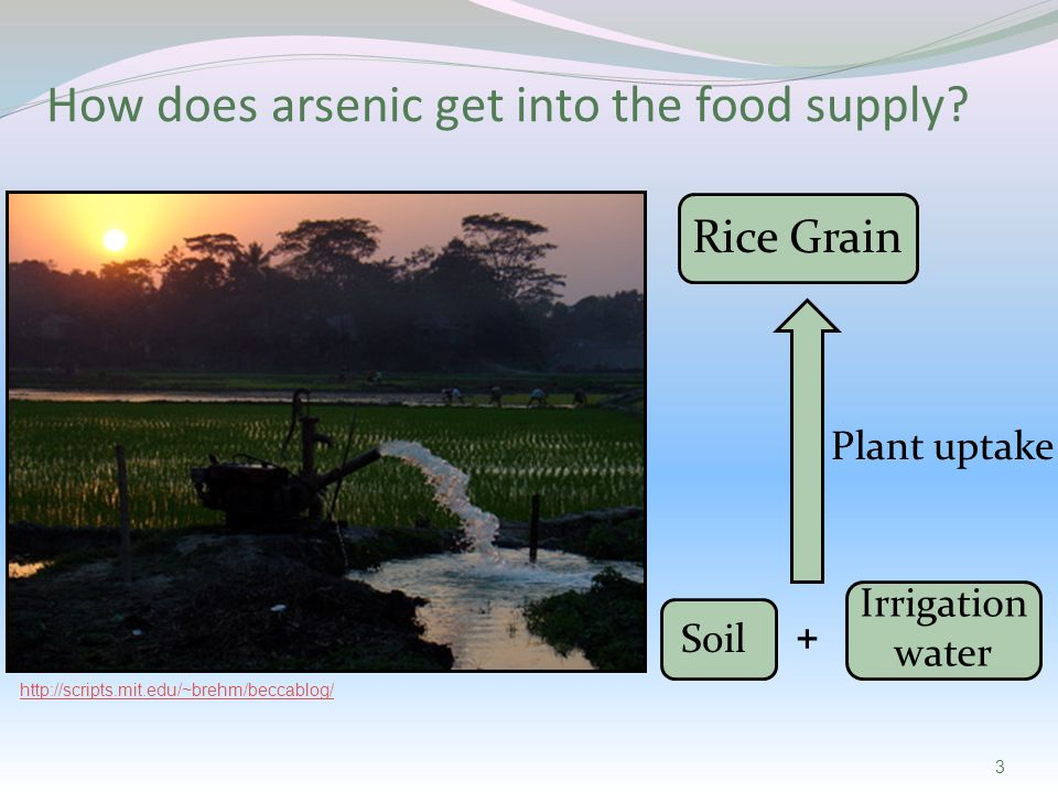 Irrigation water http://scripts.mit.edu/~brehm/beccablog/ 3 Soil Plant uptake Rice Grain + How does arsenic get into the food supply