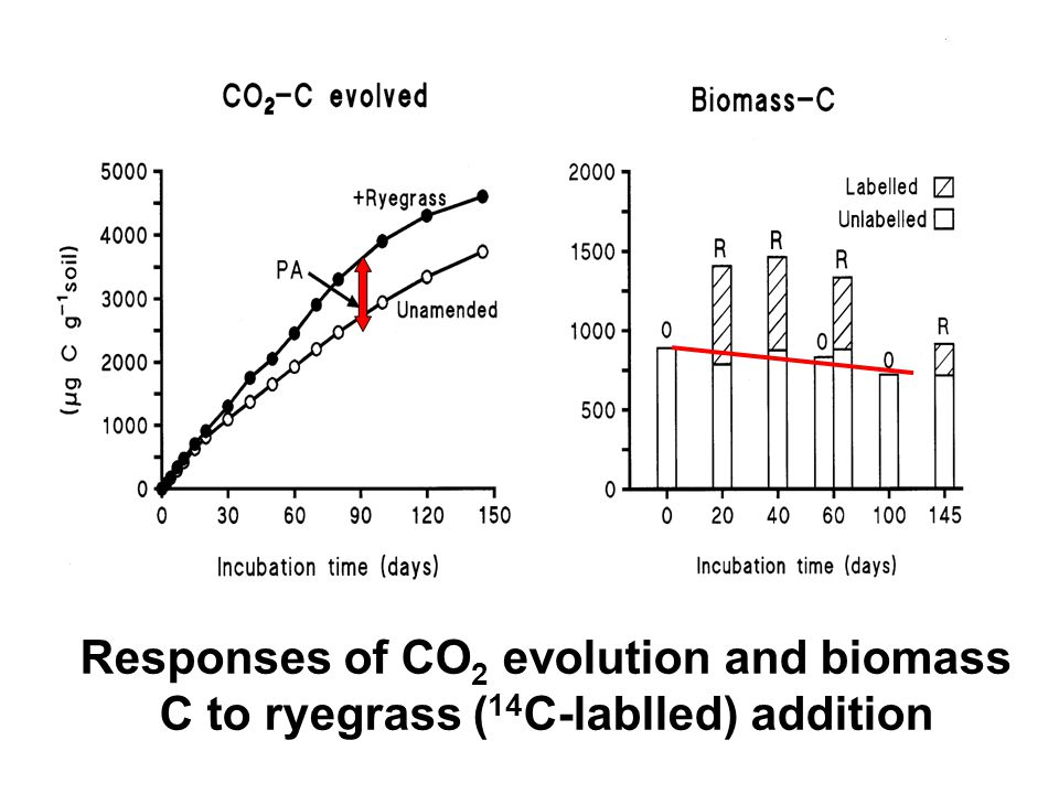 Responses of CO 2 evolution and biomass C to ryegrass ( 14 C-lablled) addition