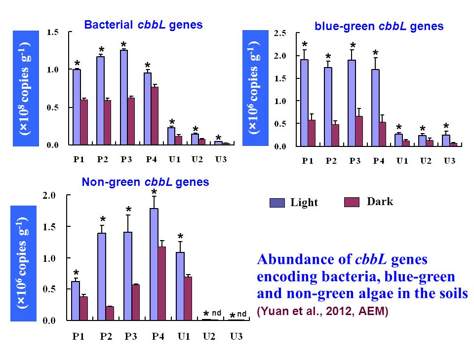 (×10 8 copies g -1 ) (×10 6 copies g -1 ) Bacterial cbbL genes blue-green cbbL genes (×10 6 copies g -1 ) Non-green cbbL genes Abundance of cbbL genes encoding bacteria, blue-green and non-green algae in the soils (Yuan et al., 2012, AEM) Light Dark * * * * * * * * * * * * * * * * * * * * * nd
