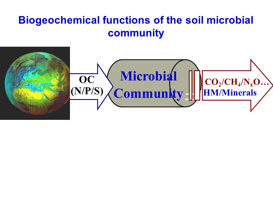 土壤生物 Microbial Community OC (N/P/S) CO 2 /CH 4 /N x O… HM/Minerals Biogeochemical functions of the soil microbial community