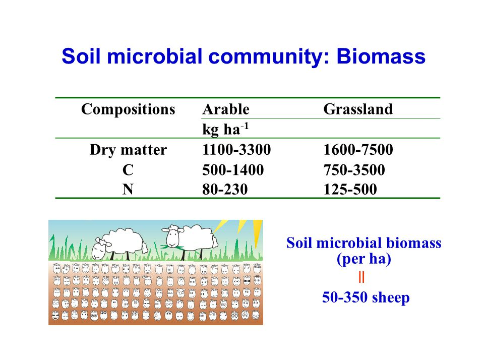 CompositionsArableGrassland kg ha -1 Dry matter1100-33001600-7500 C500-1400750-3500 N80-230125-500 Soil microbial biomass (per ha) 50-350 sheep = Soil
