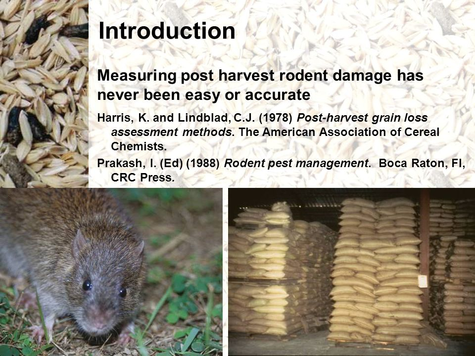 Loss rate of rice removed from baskets by rodents between sampling periods in the village of Anandapur.