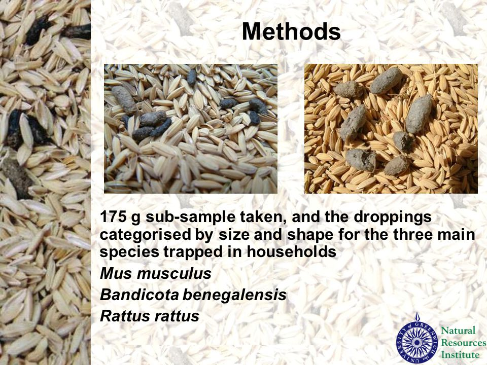 Methods Damaged rice measured by taking two lots of 100 rice grains from the 175 g sub-sample, counting number of rodent-damaged grains to obtain a percentage