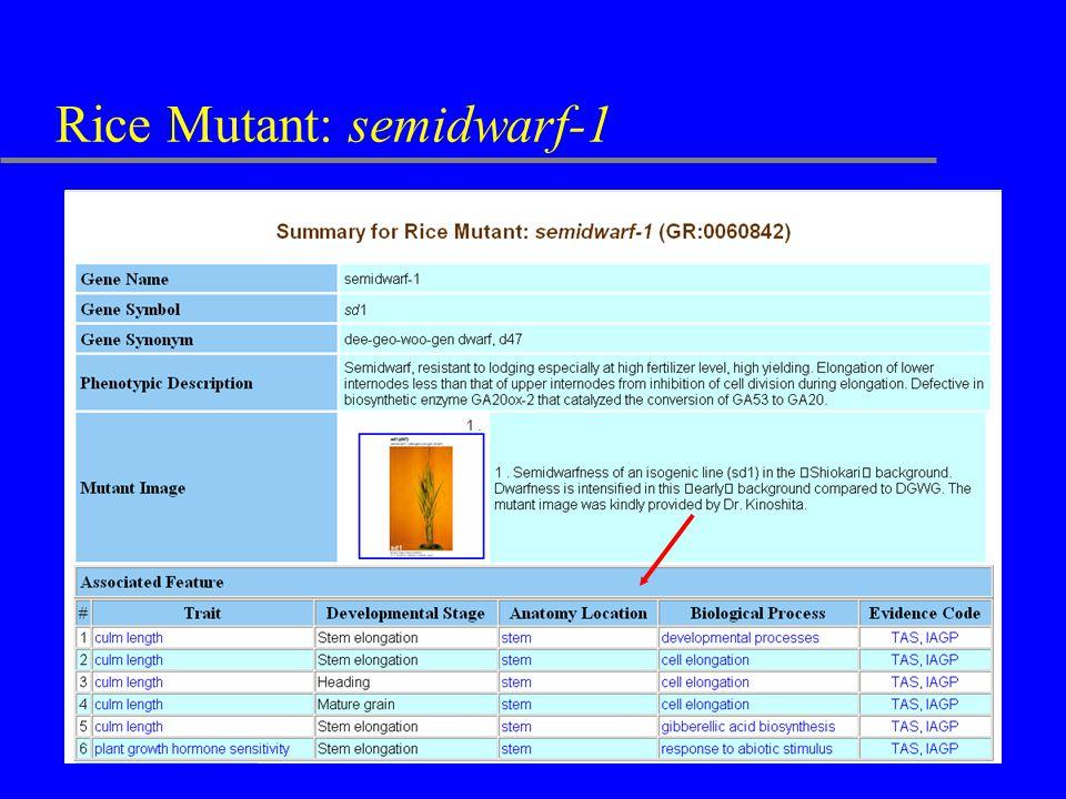 Rice Mutant: semidwarf-1