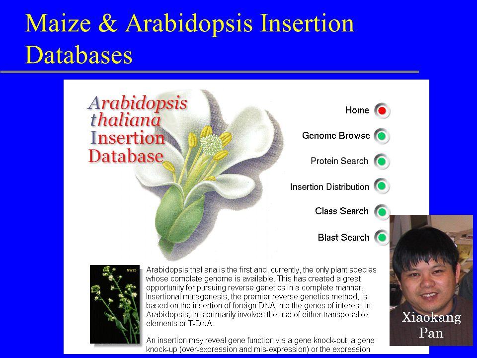Maize & Arabidopsis Insertion Databases Xiaokang Pan