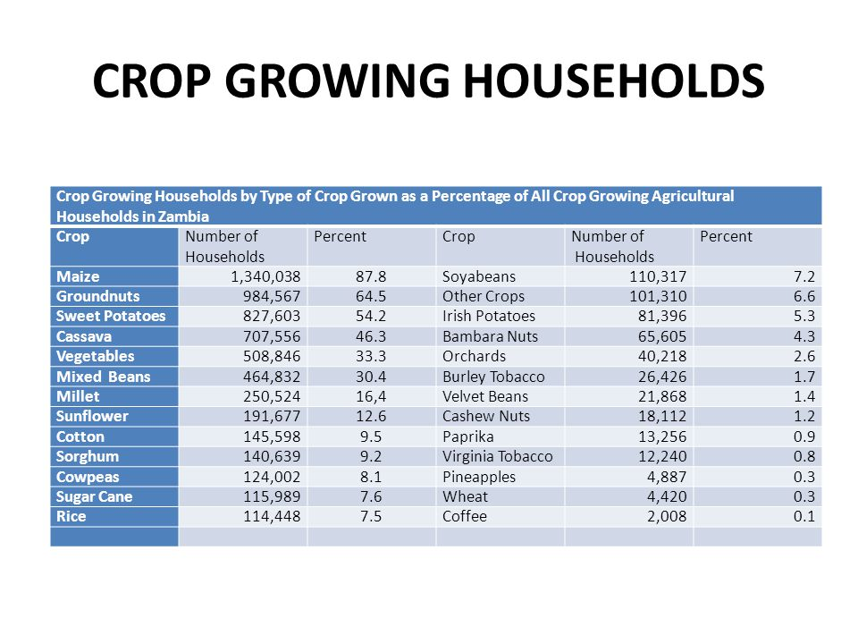CROP GROWING HOUSEHOLDS Crop Growing Households by Type of Crop Grown as a Percentage of All Crop Growing Agricultural Households in Zambia CropNumber of Households PercentCropNumber of Households Percent Maize1,340,03887.8Soyabeans110,3177.2 Groundnuts984,56764.5Other Crops101,3106.6 Sweet Potatoes827,60354.2Irish Potatoes81,3965.3 Cassava707,55646.3Bambara Nuts65,6054.3 Vegetables508,84633.3Orchards40,2182.6 Mixed Beans464,83230.4Burley Tobacco26,4261.7 Millet250,52416,4Velvet Beans21,8681.4 Sunflower191,67712.6Cashew Nuts18,1121.2 Cotton145,5989.5Paprika13,2560.9 Sorghum140,6399.2Virginia Tobacco12,2400.8 Cowpeas124,0028.1Pineapples4,8870.3 Sugar Cane115,9897.6Wheat4,4200.3 Rice114,4487.5Coffee2,0080.1