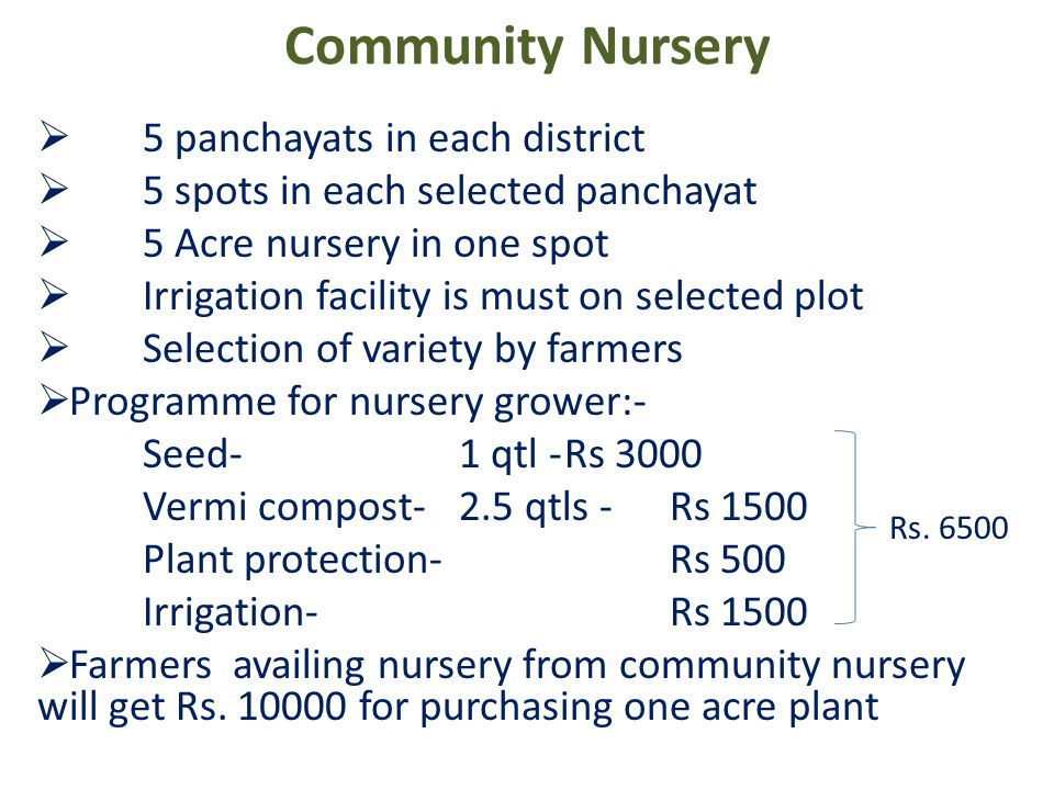 Community Nursery  5 panchayats in each district  5 spots in each selected panchayat  5 Acre nursery in one spot  Irrigation facility is must on selected plot  Selection of variety by farmers  Programme for nursery grower:- Seed-1 qtl -Rs 3000 Vermi compost-2.5 qtls -Rs 1500 Plant protection-Rs 500 Irrigation-Rs 1500  Farmers availing nursery from community nursery will get Rs.