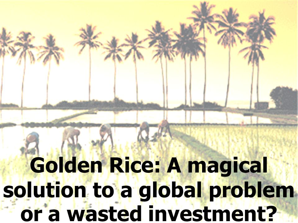 Golden Rice: A magical solution to a global problem or a wasted investment