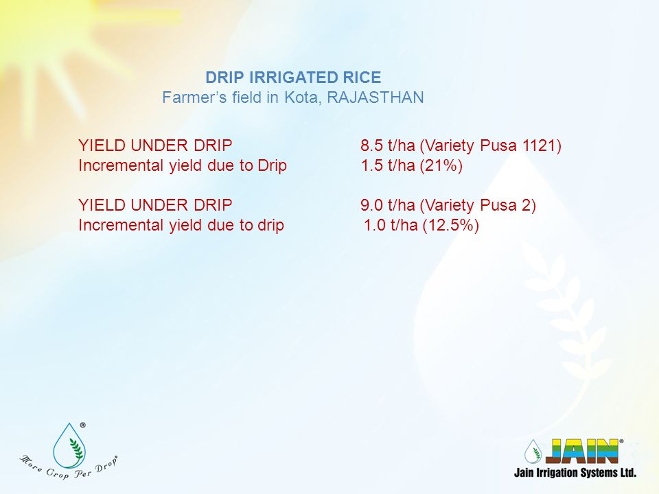 DRIP IRRIGATED RICE Farmer's Field, Narsapur, AP YIELD UNDER DRIP 3.2 t/ac Incremental yield hike in Drip1.2 t/ac (60%)