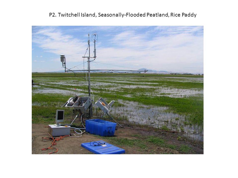 P2. Twitchell Island, Seasonally-Flooded Peatland, Rice Paddy