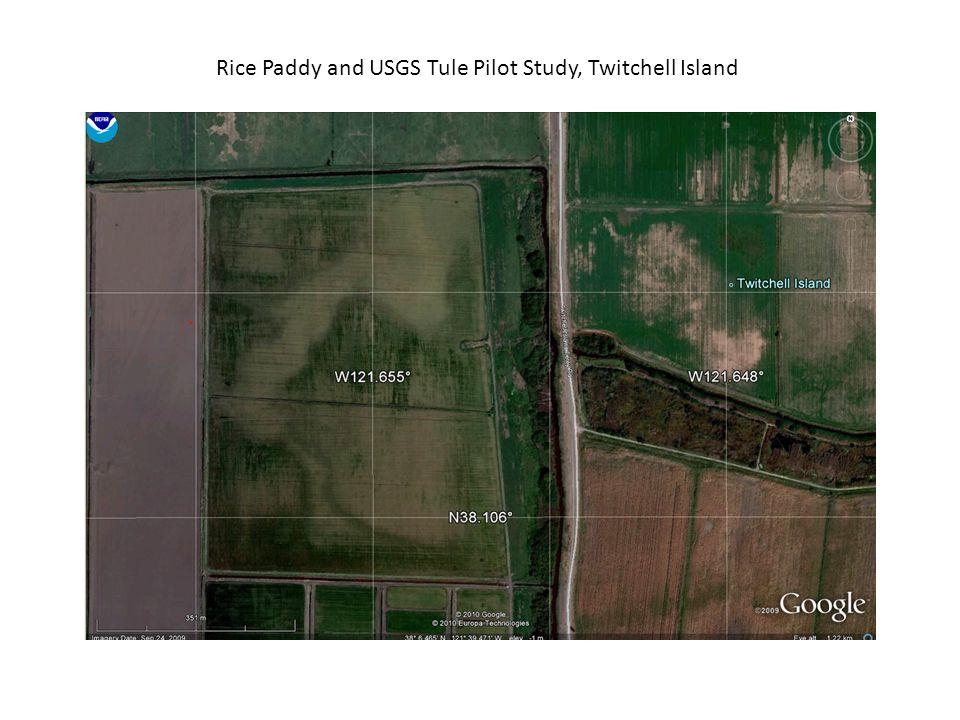 Rice Paddy and USGS Tule Pilot Study, Twitchell Island