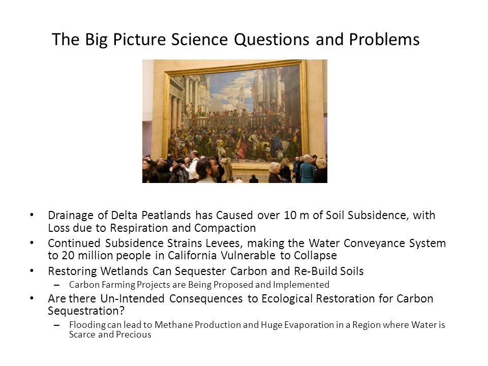 The Big Picture Science Questions and Problems Drainage of Delta Peatlands has Caused over 10 m of Soil Subsidence, with Loss due to Respiration and Compaction Continued Subsidence Strains Levees, making the Water Conveyance System to 20 million people in California Vulnerable to Collapse Restoring Wetlands Can Sequester Carbon and Re-Build Soils – Carbon Farming Projects are Being Proposed and Implemented Are there Un-Intended Consequences to Ecological Restoration for Carbon Sequestration.
