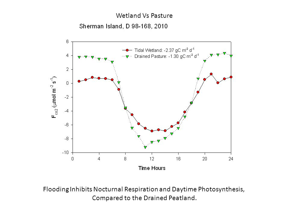 Wetland Vs Pasture Flooding Inhibits Nocturnal Respiration and Daytime Photosynthesis, Compared to the Drained Peatland.