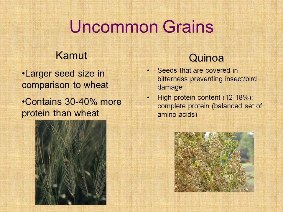 Uncommon Grains Quinoa Seeds that are covered in bitterness preventing insect/bird damage High protein content (12-18%); complete protein (balanced set of amino acids) Kamut Larger seed size in comparison to wheat Contains 30-40% more protein than wheat