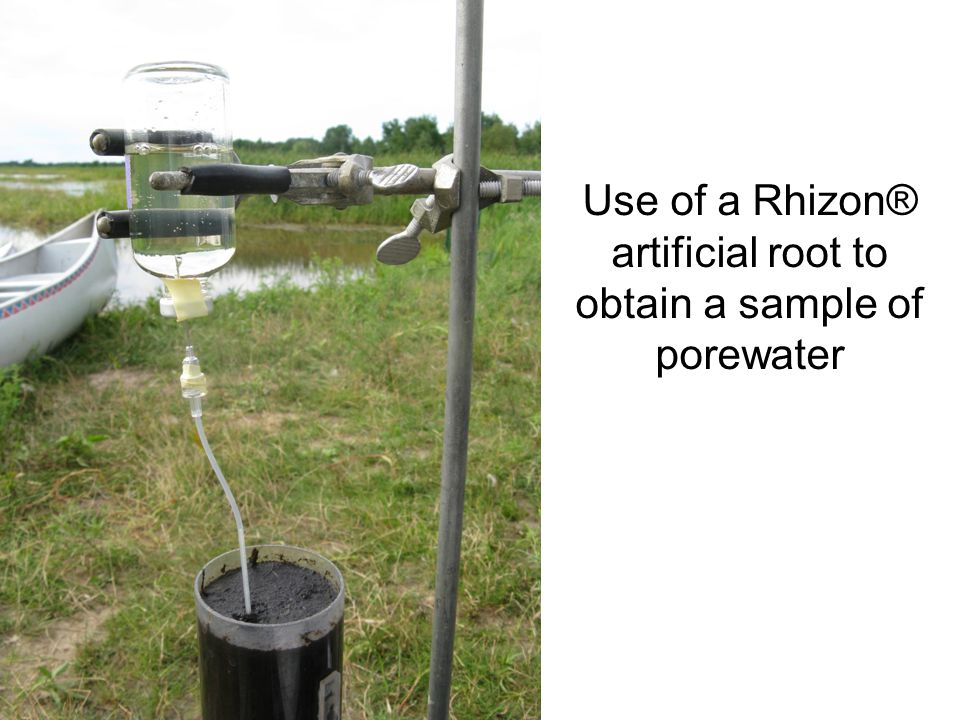 Use of a Rhizon® artificial root to obtain a sample of porewater